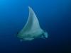 mozambique-manta-duiken