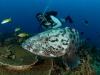 mozambique-duiken
