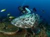 Diving Mozambique